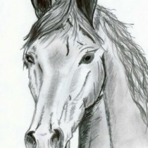 Illustration du profil de mattfred