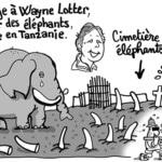 elephants-550